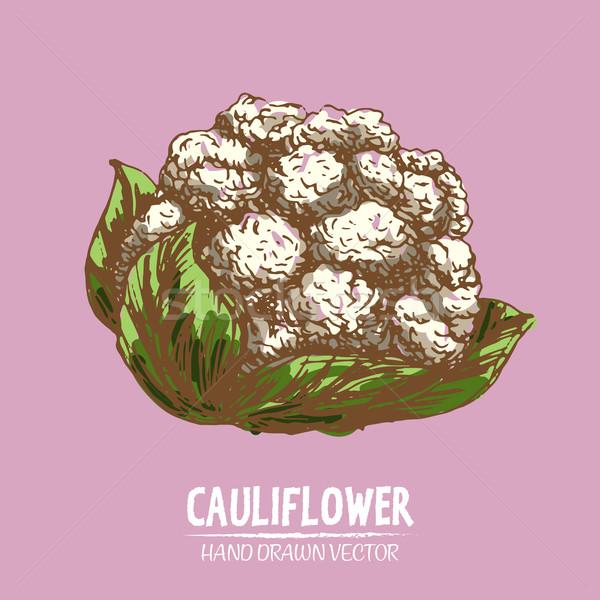 Digital vector detailed color cauliflower hand Stock photo © frimufilms