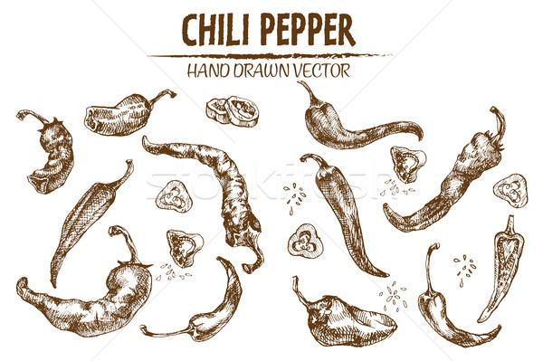 Digital vector detailed line art chili pepeper Stock photo © frimufilms