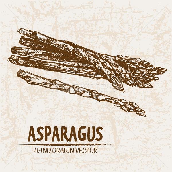 Stock photo: Digital vector detailed line art asparagus