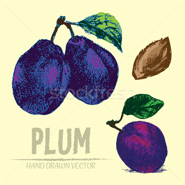 Digital vector detailed color plum hand drawn Stock photo © frimufilms