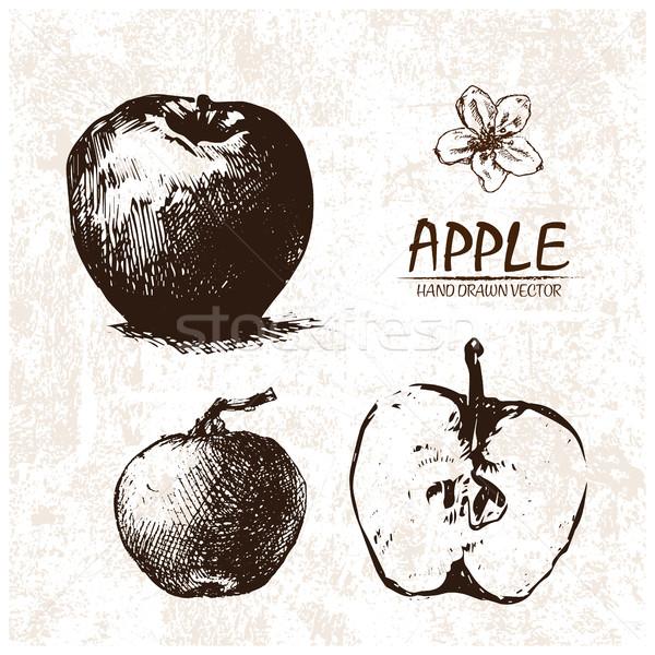 Digital vetor detalhado maçã retro Foto stock © frimufilms