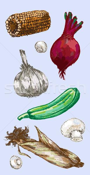 Dijital vektör ayrıntılı renk sebze Stok fotoğraf © frimufilms