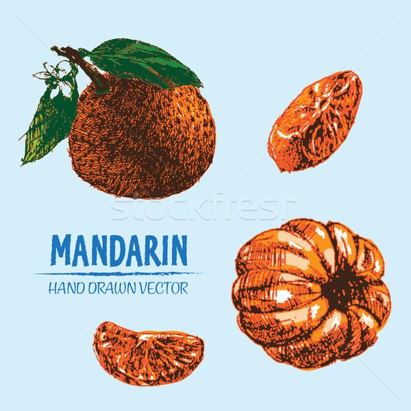 Digitális vektor részletes szín narancs mandarin Stock fotó © frimufilms