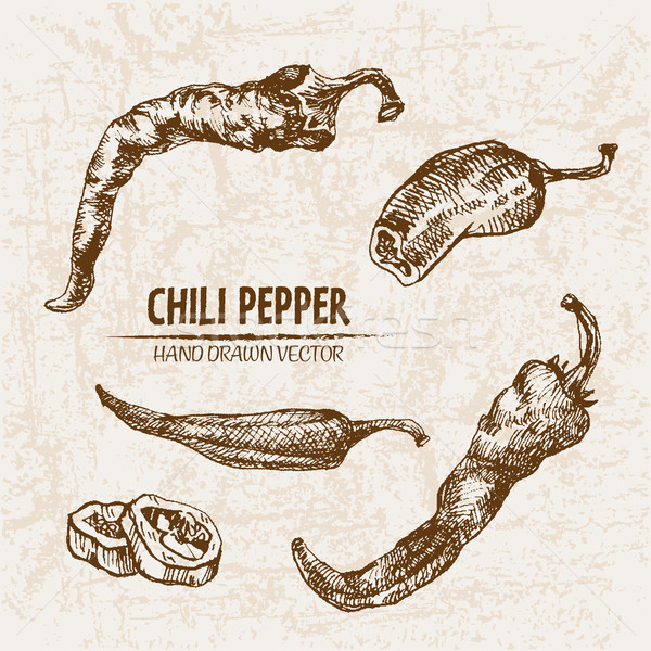 Digital vector detailed line art chili pepeper Stock photo © frimufilms