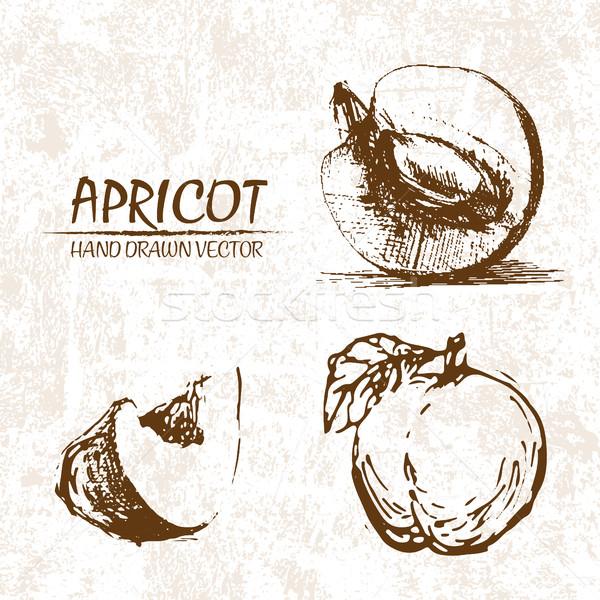 Digitális vektor részletes sárgabarack kézzel rajzolt retro Stock fotó © frimufilms