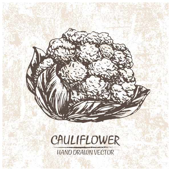 Digital vector cauliflower hand drawn illustration Stock photo © frimufilms