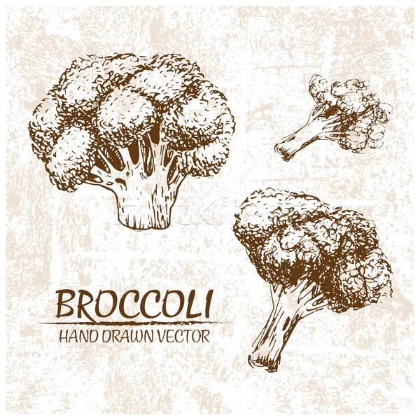 Stok fotoğraf: Dijital · vektör · brokoli · örnek · ayrıntılı