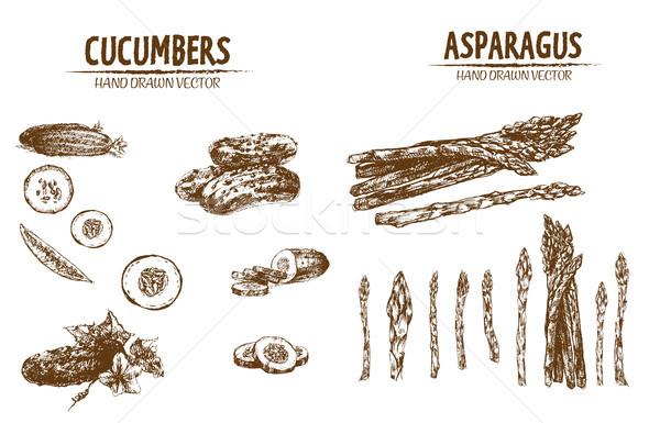 Stock photo: Digital vector detailed line art cucumber