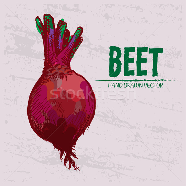 Digital vector detailed red beet hand drawn Stock photo © frimufilms