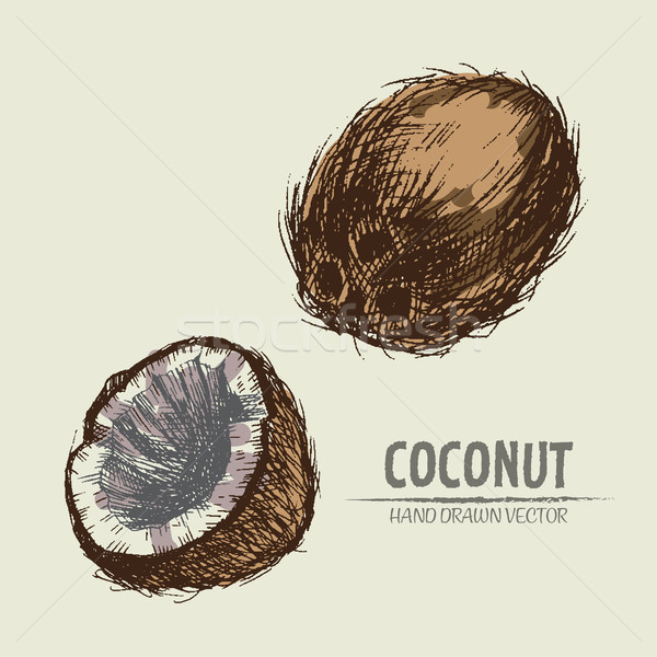 Digital vector detailed coconut hand Stock photo © frimufilms