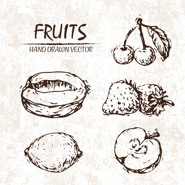 Digital vector detailed fruit hand drawn Stock photo © frimufilms