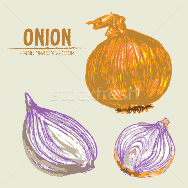 Digital vector detailed onion hand drawn Stock photo © frimufilms