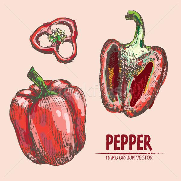Stock photo: Digital vector detailed line art color pepper