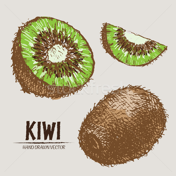 Digital vector detailed color kiwi hand drawn Stock photo © frimufilms