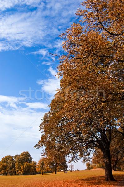 ősz gyönyörű tájkép természet kert szépség Stock fotó © froxx