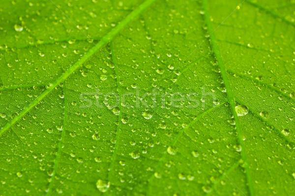 Waterdrops Stock photo © froxx