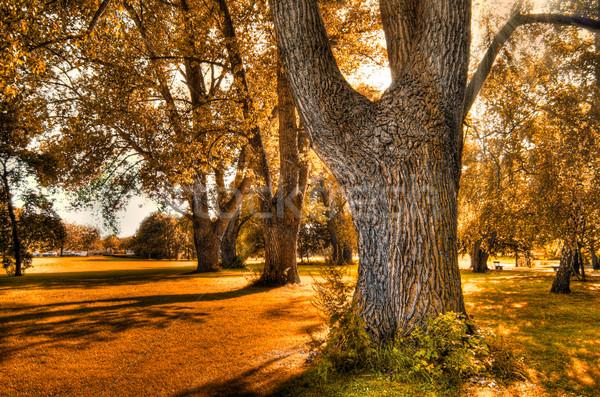 Autunno bella panorama natura giardino sfondo Foto d'archivio © froxx