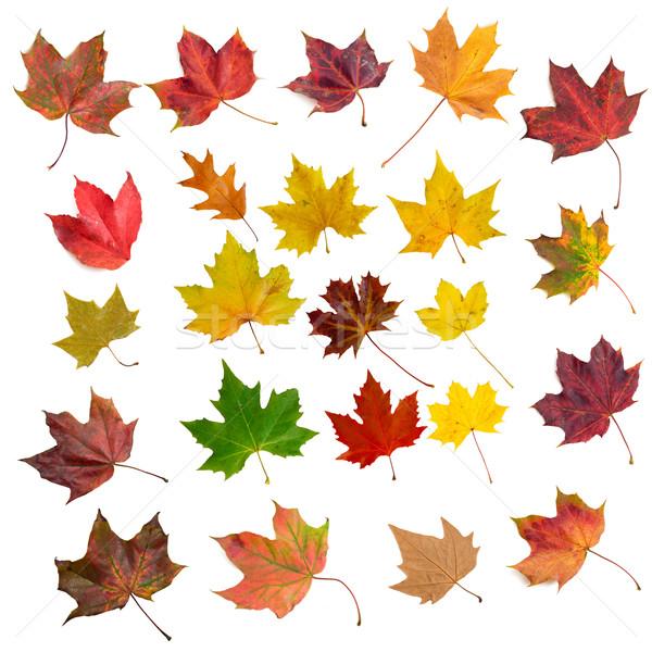 Set isolato natura rosso autunno Foto d'archivio © froxx