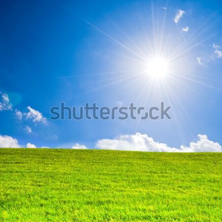 Raggi di sole cielo blu erba verde cielo albero Foto d'archivio © froxx