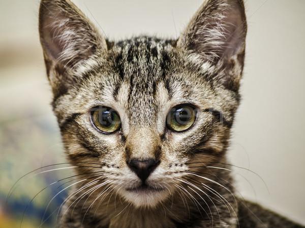 мужчины котенка портрет голову красивой Sweet Сток-фото © fxegs