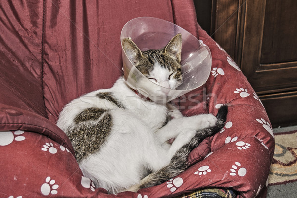 Chat maison protection ordre tête malade Photo stock © fxegs
