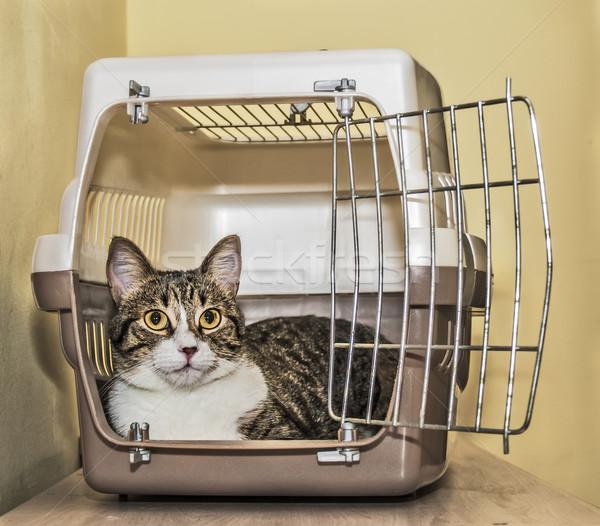 Macska láda bent biztonság doboz szállítás Stock fotó © fxegs