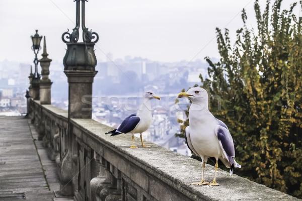 Sirályok kettő város madár városi kő Stock fotó © fxegs