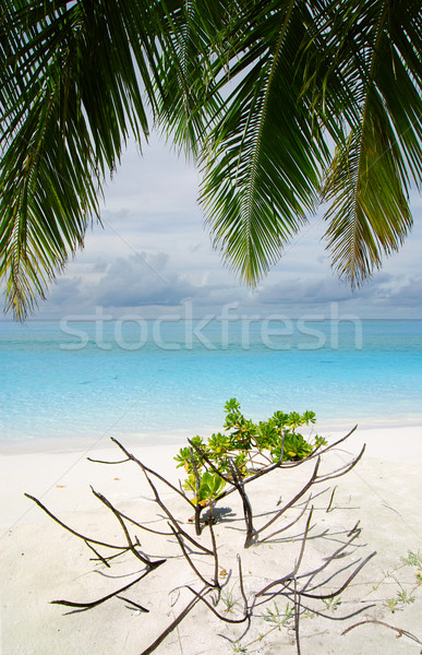 Playa tropical hermosa arena blanca palma Maldivas árbol Foto stock © fyletto