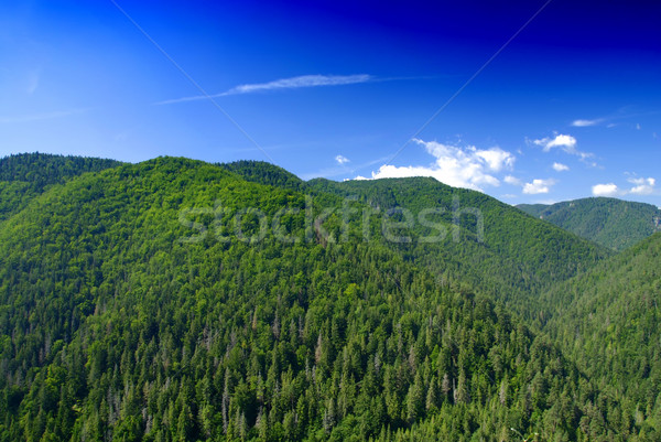 Bergen gedekt groene pine hemel landschap Stockfoto © fyletto