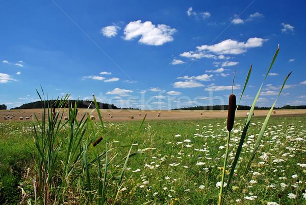 ロマンチックな 風景 フロント フィールド 草原 森林 ストックフォト © fyletto
