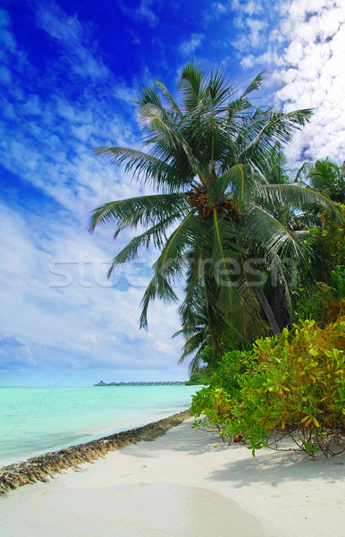 Tropikalnej plaży Malediwy Kokosowe palmy wiszący morza Zdjęcia stock © fyletto