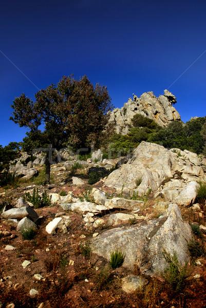 月 谷 美しい 岩 空 ツリー ストックフォト © fyletto