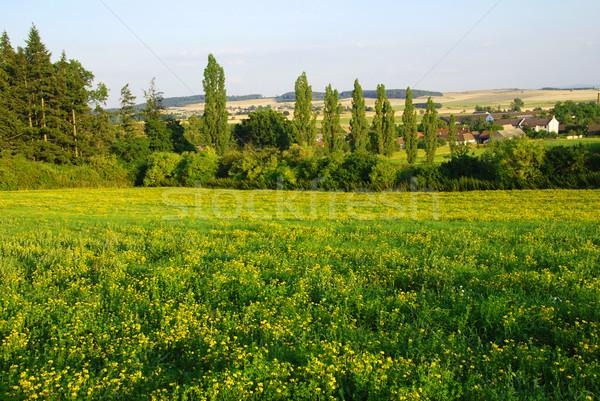 Voorjaar landschap mooie weide vol gele bloemen Stockfoto © fyletto