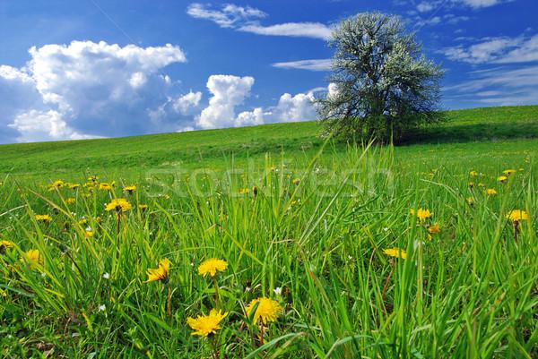 Voorjaar landschap mooie boom bloeien weide Stockfoto © fyletto