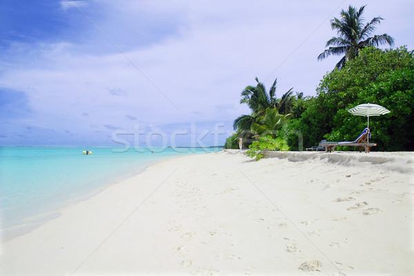 Foto stock: Playa · hermosa · verde · Bush · tumbona · cielo