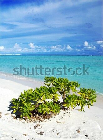 Tropical paradise Stock photo © fyletto