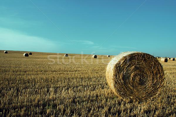 Straw rolls  Stock photo © fyletto