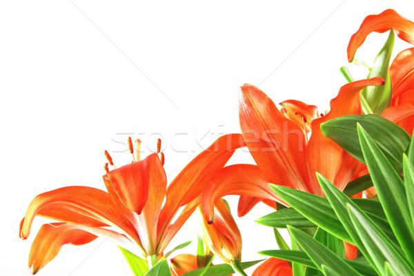 Belle rouge coup au-dessous isolé Photo stock © fyletto