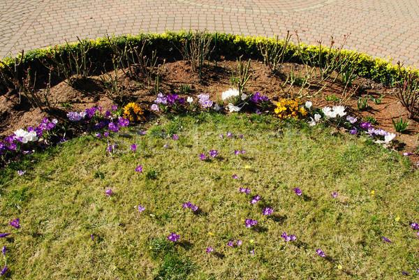 Jardín hermosa primavera pavimento paralelo círculos Foto stock © fyletto