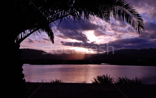 тропические закат Palm пальма силуэта гор Сток-фото © fyletto