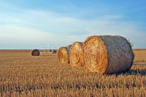 Veld oogst stro zon brood Stockfoto © fyletto
