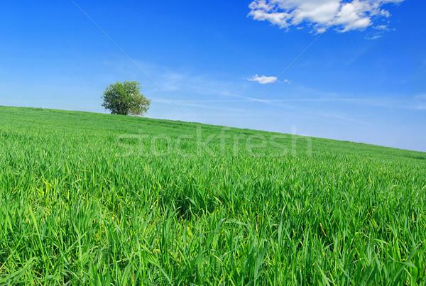 árbol hierba solitario primavera hierba verde cielo azul Foto stock © fyletto