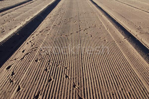 Beach and bird tracks Stock photo © fyletto