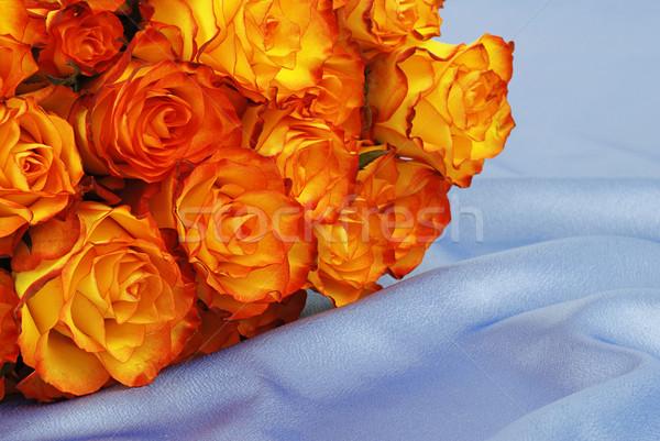 Rózsák szatén gyönyörű narancs fektet kék Stock fotó © fyletto