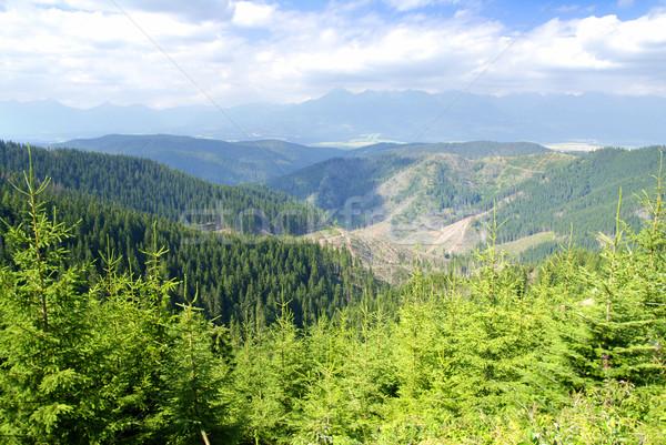 гор покрытый зеленый соснового небе пейзаж Сток-фото © fyletto