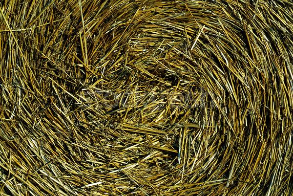 Paille rouler détail texture pain blé Photo stock © fyletto