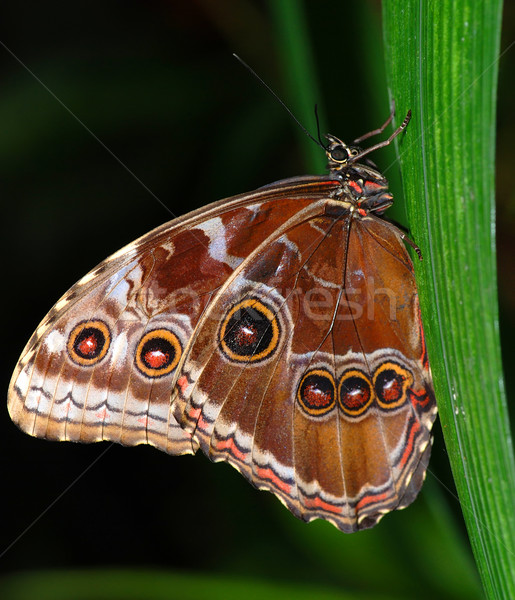 Zwei Schmetterlinge Zweig tropischen Schmetterling Sitzung Stock foto © fyletto