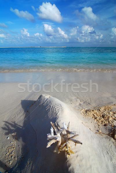 Playa de coral hermosa frente sol fondo Foto stock © fyletto