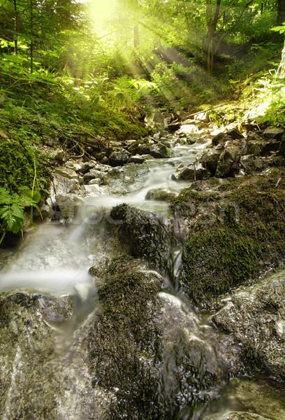 Beautiful brook with sun Stock photo © fyletto