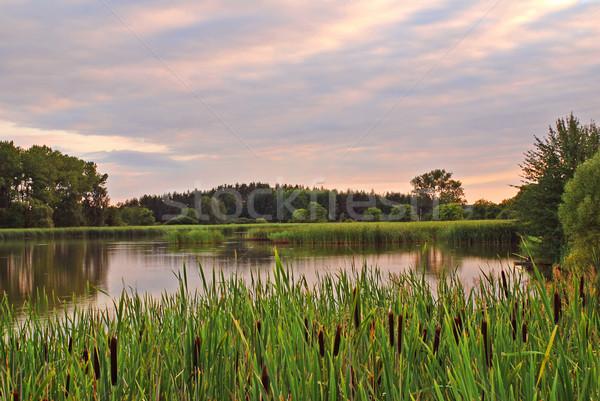 Estanque puesta de sol flor nubes fondo Foto stock © fyletto